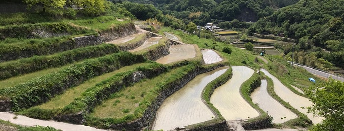 中山千枚田 is one of 小豆島探検隊.