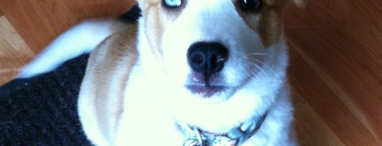 AARF Pet Central / Atlanta Animal Rescue Friends is one of Alda'nın Beğendiği Mekanlar.