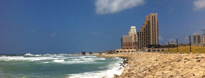 Leonardo Beach is one of Lugares favoritos de Marina.