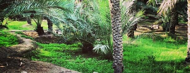 Al Ain Oasis is one of 2016 - DXB.