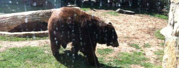 Baylor University Bear Habitat is one of Waco trip.