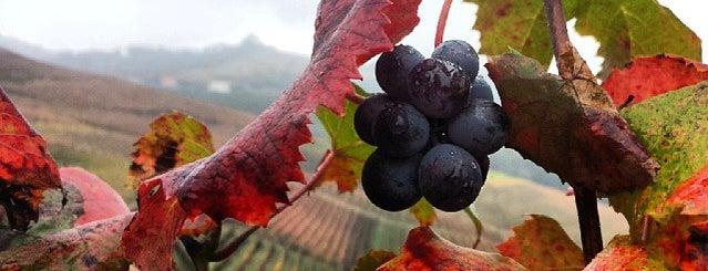 Azienda Agricola Fratelli Aimasso is one of Piemonte my love.