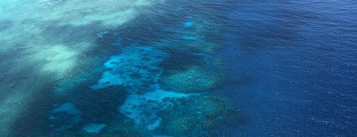 Hastings Reef is one of Ozzie Kiwi.