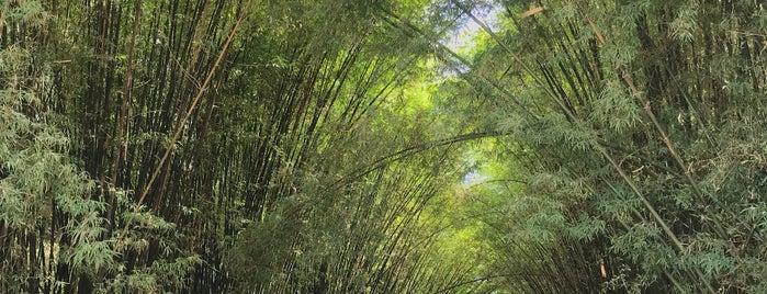 อุโมงค์ไผ่ is one of สระบุรี, นครนายก, ปราจีนบุรี, สระแก้ว.
