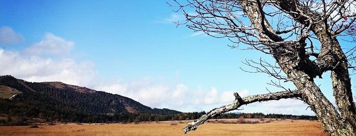 八島ヶ原湿原 is one of Mikaさんのお気に入りスポット.