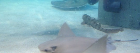 Stingray Reef - Kemah Boardwalk is one of Madeline's Liked Places.