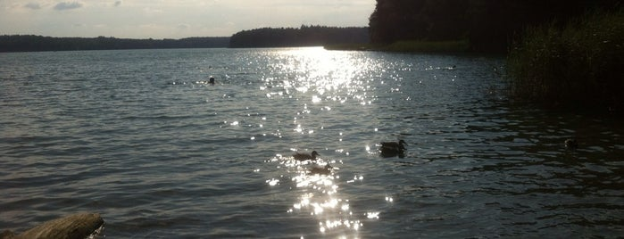 Großer Stechlinsee is one of Take Me to the Lakes.