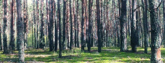 Волоша is one of Полесье.