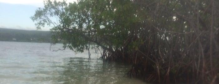 Gilligan's Island (Cayo Aurora) is one of Tempat yang Disukai Estefania.
