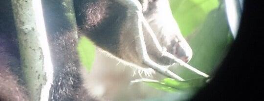 Bornean Sun Bear Conservation Centre (BSBCC) is one of Lugares favoritos de Ben.