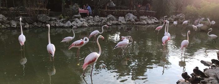 Flamingo Köy is one of Посетить.