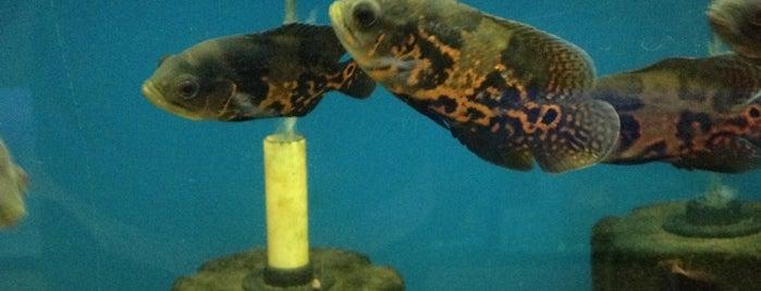 Tropical Fish & Pets is one of Lugares favoritos de Fabrizio.
