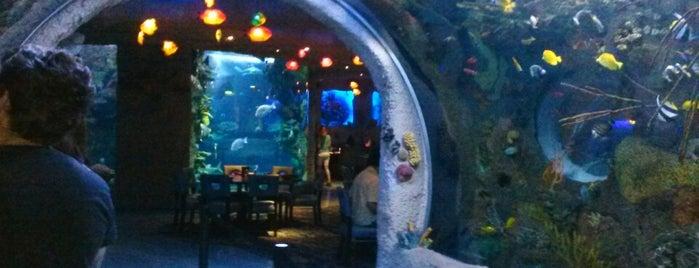 Aquarium Restaurant is one of Lunch.