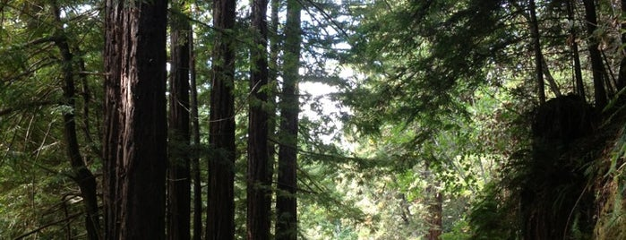 Purisima Redwoods Open Space Preserve (South Parking Lot) is one of Sun Pr0n Manor Adventures.