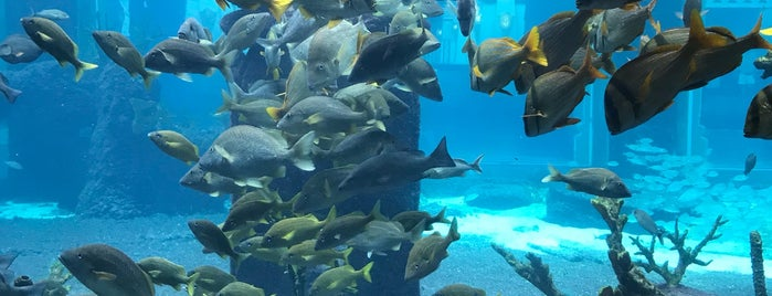 Atlantis Marine Habitat is one of Bahamas.