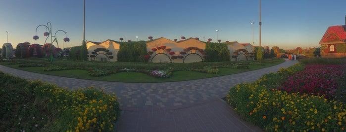 Dubai Miracle Garden is one of Locais curtidos por Aylin.