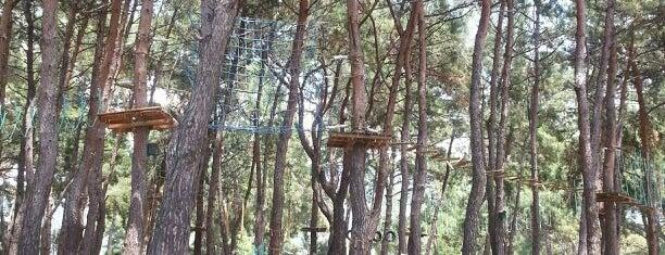 monkey park denizatı is one of Mehtapさんのお気に入りスポット.