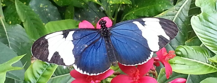 Key West Butterfly & Nature Conservatory is one of vacation hot spots.