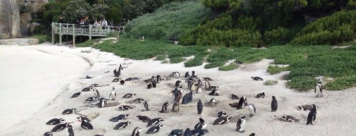 Boulders Beach Penguin Colony is one of #eTAS14 CPT.