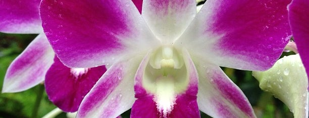 National Orchid Garden is one of Singapore Favorites!.