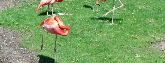 Idabel Wilmot Borchert Flamingo Exhibit and Overlook is one of Chrisito's Liked Places.