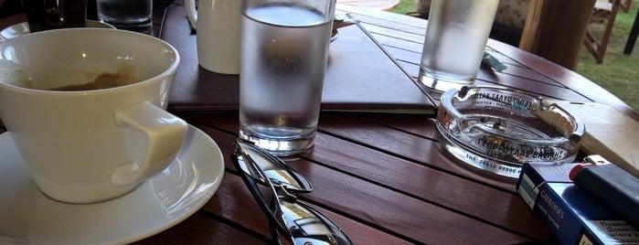 Gde cveta limun žut is one of Out of Belgrade.