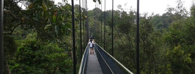 TreeTop Walk is one of Singapura.