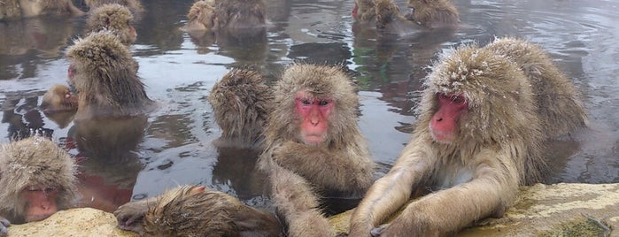 Jigokudani Snow Monkey Park is one of Far Far Away.