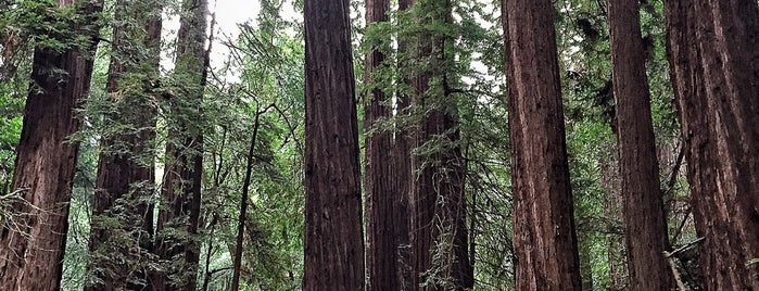 Muir Woods National Monument is one of san fo.