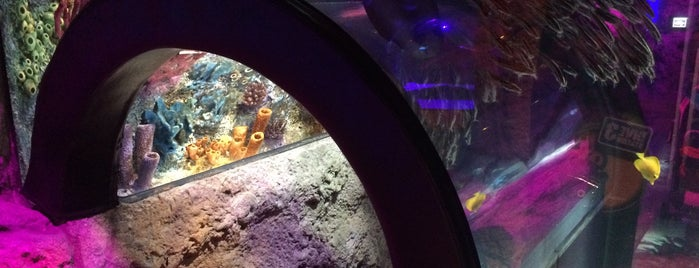 Orlando SeaLife Aquarium is one of Locais salvos de Priscila.