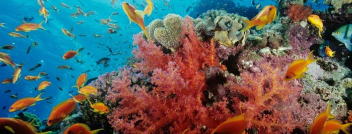 Georgia Aquarium is one of World.