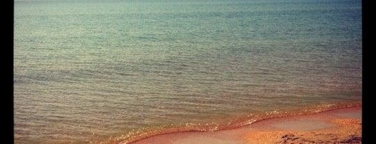 Дикий пляж Витязево is one of สถานที่ที่ Svetlana ถูกใจ.