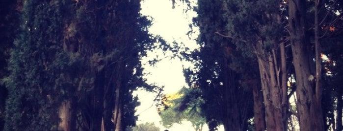Parco degli Scipioni is one of Rome / Roma.