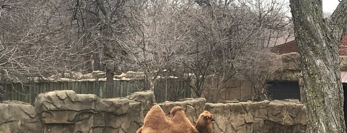 Camel is one of Tempat yang Disukai Brandon.