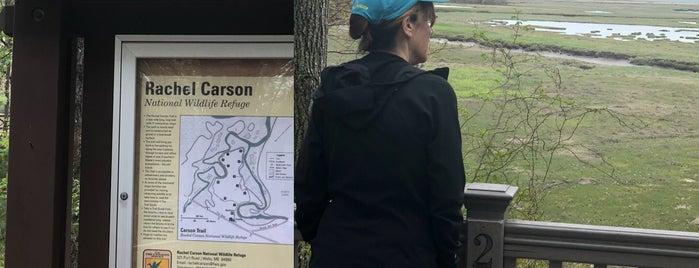 Rachel Carson National Wildlife Refuge is one of Lieux qui ont plu à Eric.