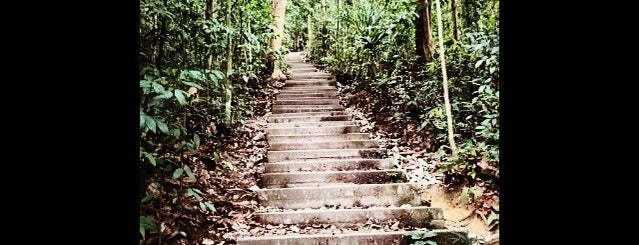 Bukit Timah Hiking Trails is one of Trek Across Singapore.