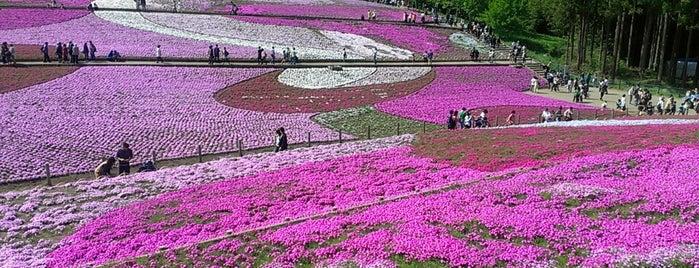 芝桜の丘 is one of Daisukeeさんのお気に入りスポット.
