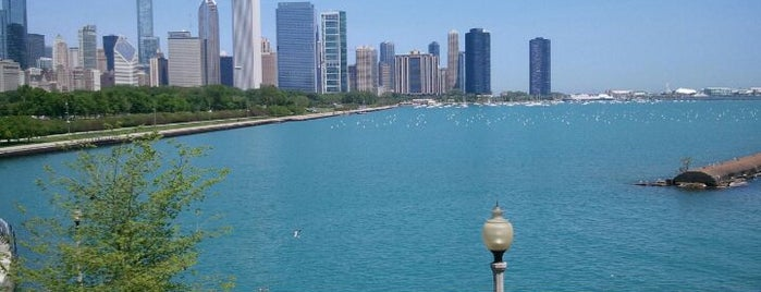 Shedd Aquarium is one of 101 places to see in Chicago before you die.