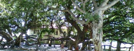 Lahaina Banyan Court Park is one of Maui, HI.