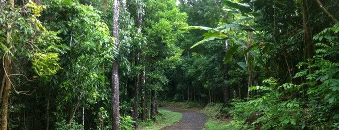 Forêt départementalo-domaniale Montravail is one of Forêts, lieux de balade en nature en Martinique.