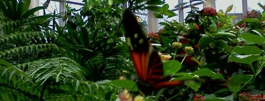 Tropical Butterfly House is one of Reasons to Love Winter Dec 2011.