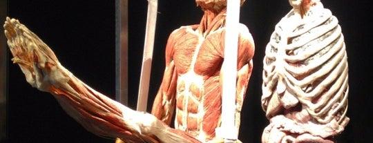 Mostra Body World is one of Locais curtidos por Valeria.