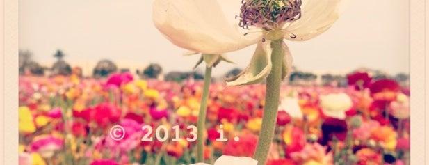 The Flower Fields is one of sandeezybeezy.