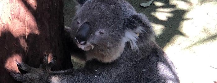 Koala Hospital is one of Australie.