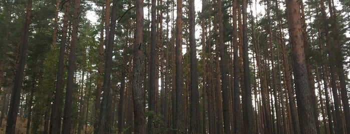 Лысая гора is one of Irina : понравившиеся места.