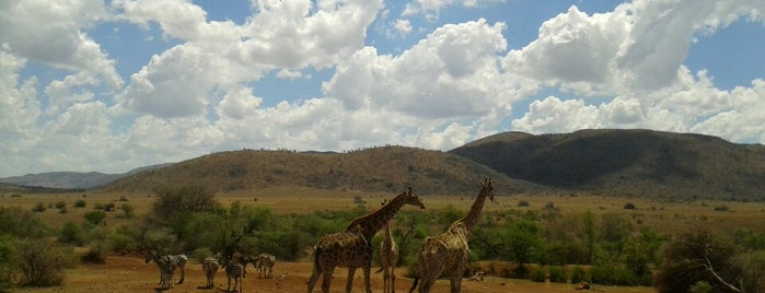 Pilanesberg National Park is one of South Africa. Best..