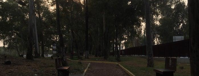 Pista de Running del IPN is one of Lugares favoritos de Magaly.