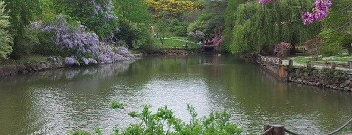 Atatürk Arboretumu is one of İSTANBUL.