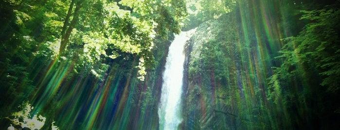 浄蓮の滝 is one of 伊豆.