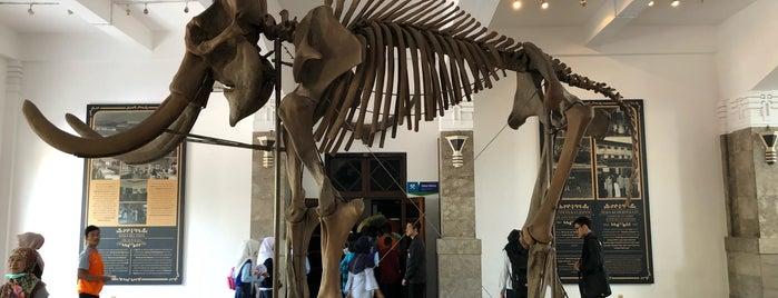 Museum Geologi is one of Bandung ♥.